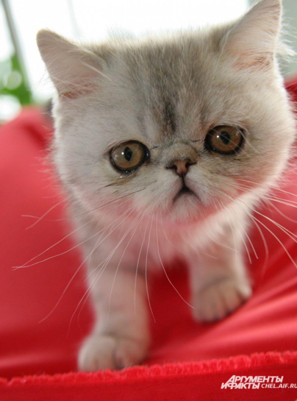 По статистике, 95% хозяев кошек разговаривают со своими питомцами.