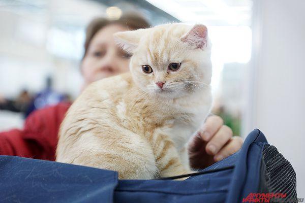 В Древнем Египте кошки считались воплощением богини плодородия Бастет и почитались как священные животные.