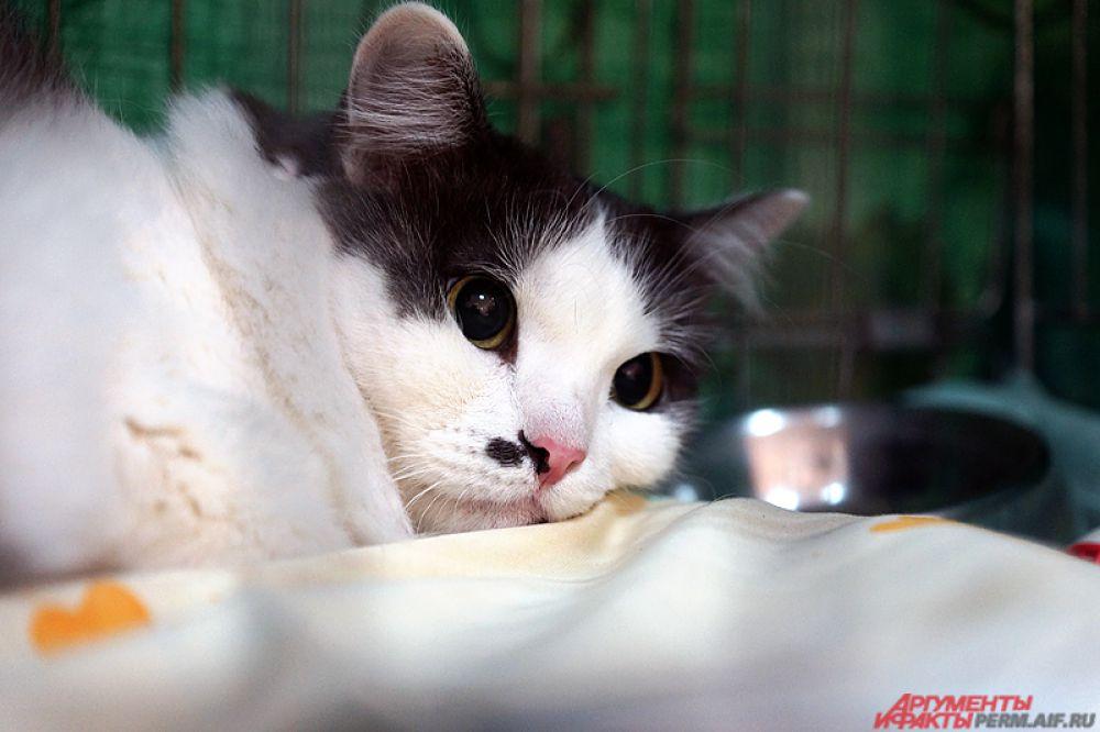В первый день весны по традиции в России отмечается День кошек.