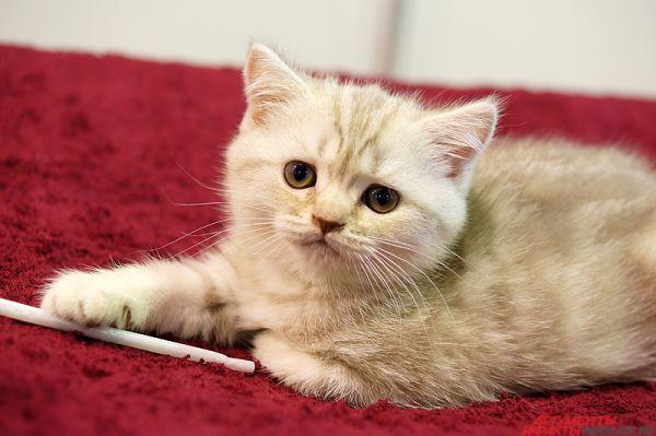 Главным торжеством для пушистых является Всемирный день кошек, отмечаемый 8 августа.