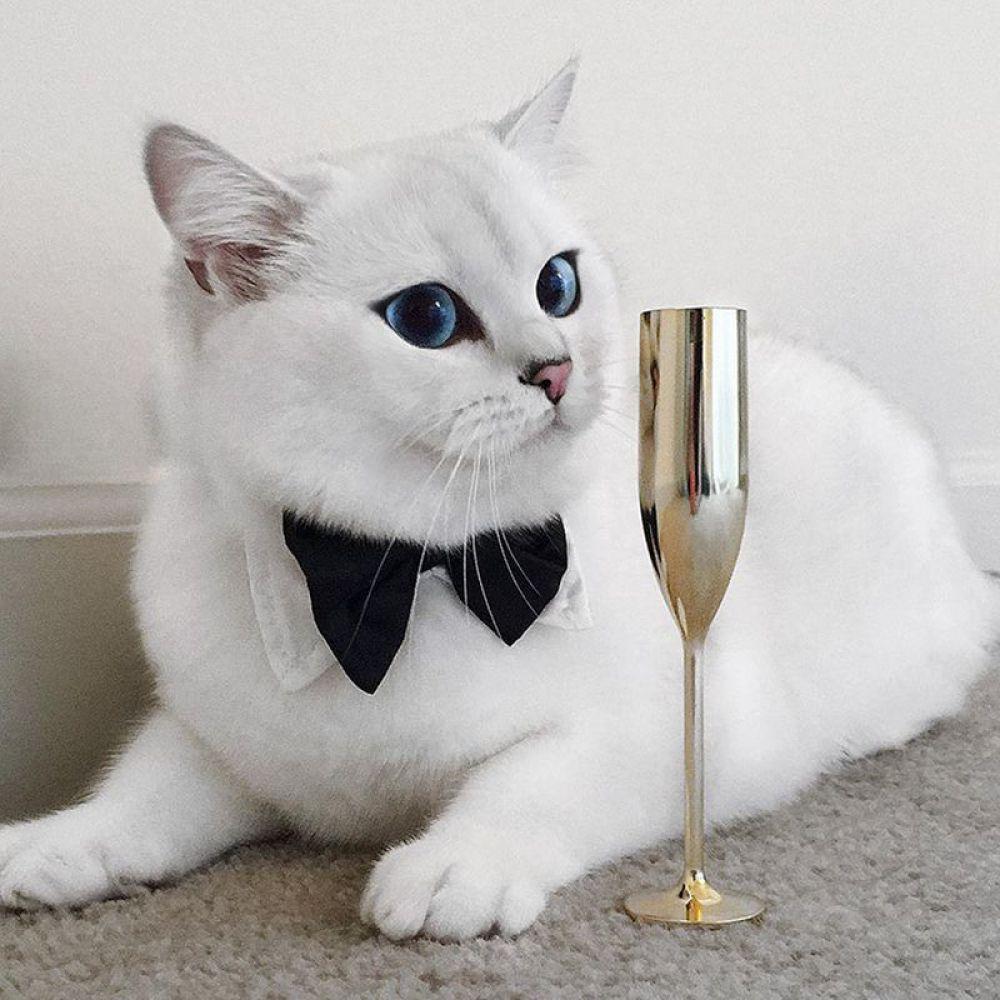 Кот по кличке Коби звезда интернета