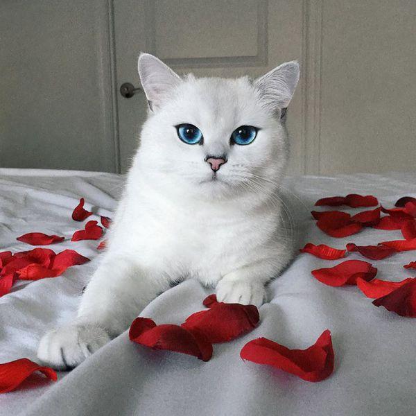 Этот кот однозначно претендует на звание обладателя самых красивых глаз в мире кошачьих
