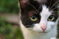 1 марта - День кошки.