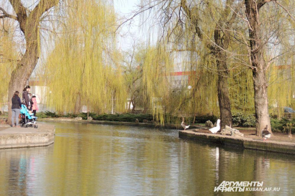 В эти теплые дни особенно приятно покормить птиц у пруда.