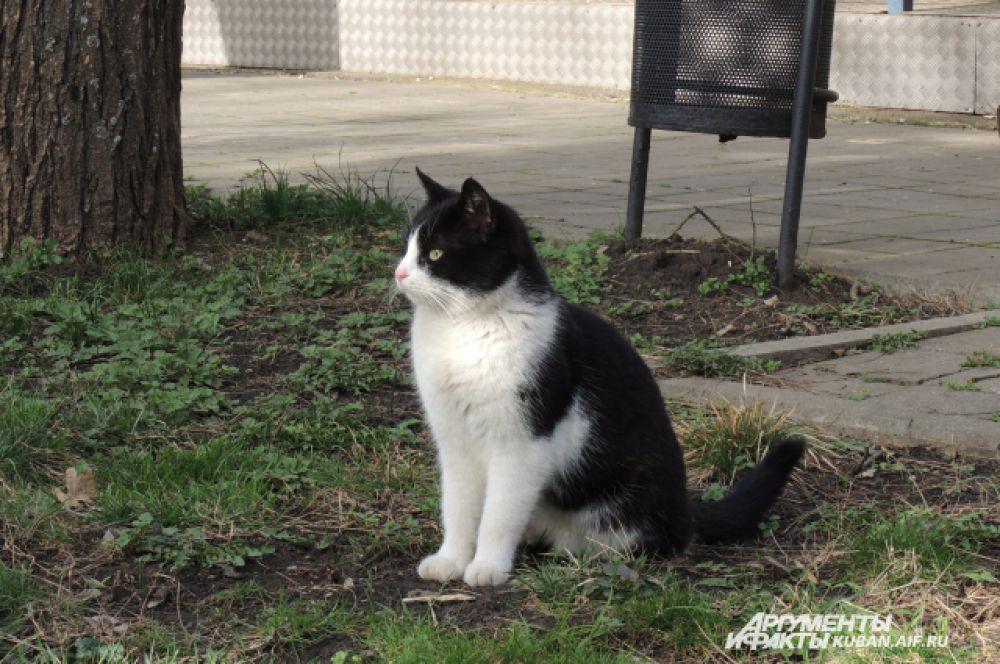1 марта - Всемирный день кошек.