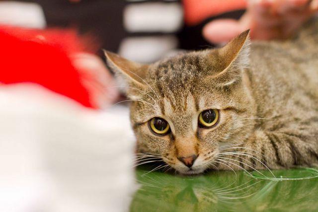 Неделя Прусского кота началась в Калининграде.
