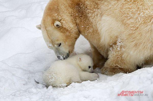 Медвежонок чувствует себя на улице ещё неуверенно.