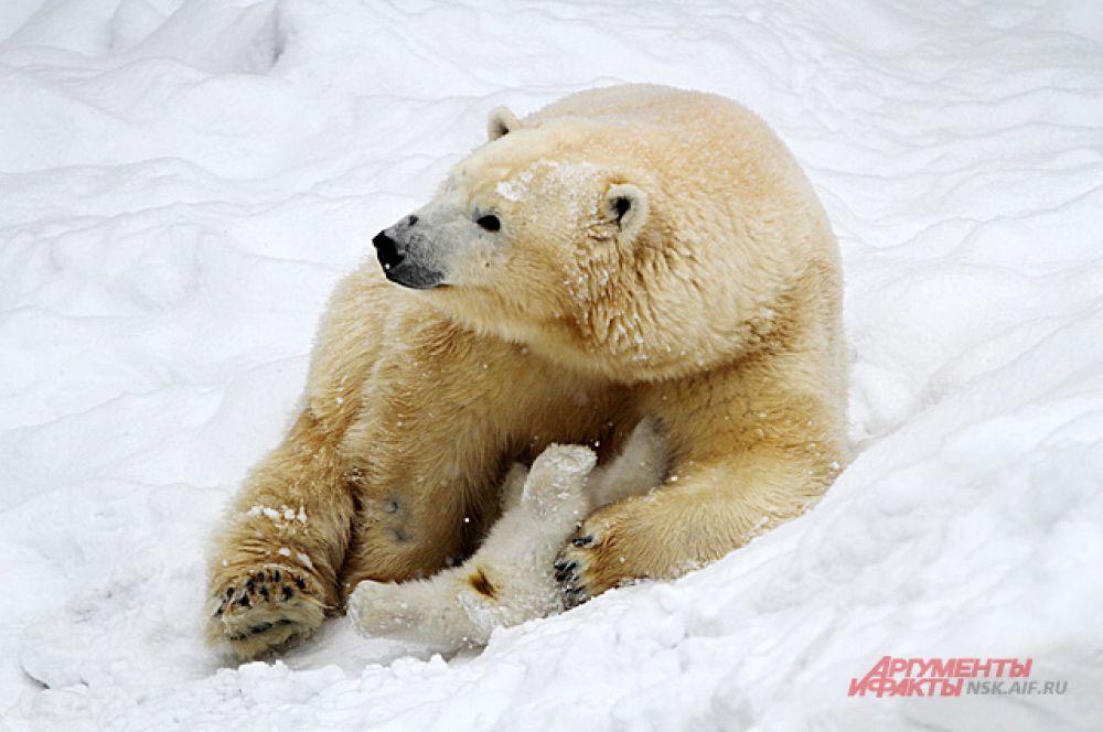 Пока же медведица и малыш проводят время вместе и им нужно спокойствие.