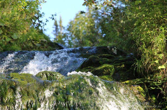 В Кузбассе есть и нетронутые уголки природы. Например, в заповеднике «Кузнецкий Алатау».