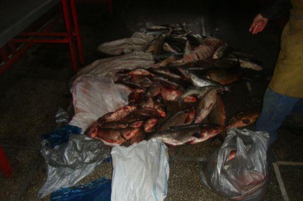 Операция «Путина» направлена на масштабную борьбу с браконьерством и пресечение незаконного оборота рыбной продукции.