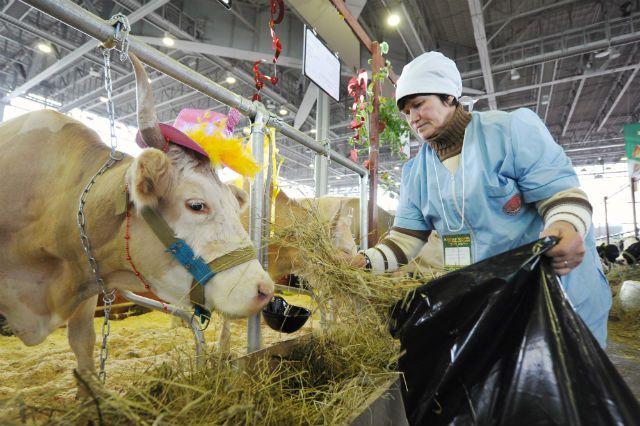 В Омской области 1 кг говядины обойдётся более чем в два раза дешевле, чем на Чукотке.