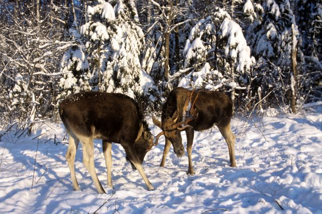 В Омской области подвели итоги зимнего учёта животных.