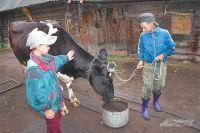 Если школу в селе закрыть, коров придётся под нож пустить.