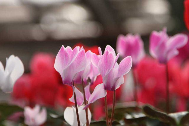 Саратов заказать цветы круглосуточно