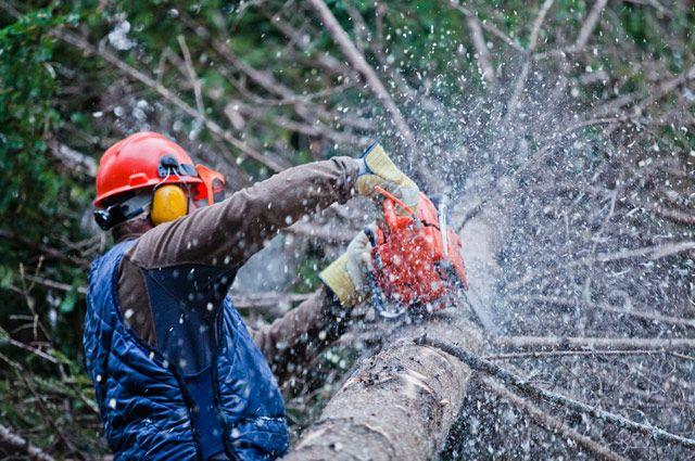 Лесоруб - самая опасная в мире профессия. Лесорубы получают травмы чаще других работников.