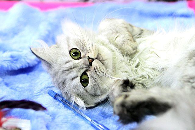 Жители многоэтажного дома спасли кошку.