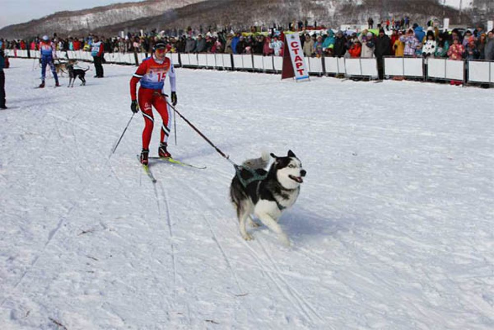 Скиджоринг на Камчатке набирает обороты!