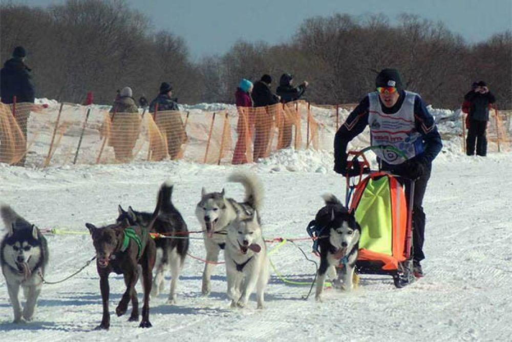 Не обошлось и без традиционных гонок на собачьих упряжках.
