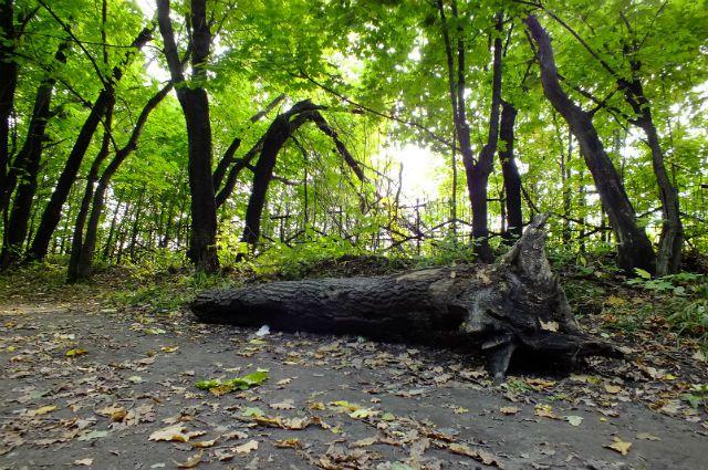 В парке «Победа».