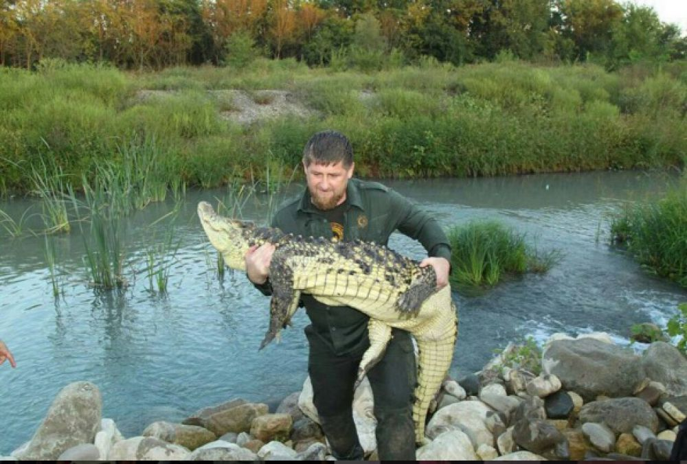 Кадыров выложил фото, на котором он держит достаточно большого крокодила. И пасть у хищника даже без намордника. Тем не менее, животное покорно лежит на руках чеченского лидера и совсем не подает признаков агрессии.