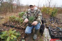Агроном рекомендует в первую очередь обращать внимание на корень растения, которое вы хотите приобрести.