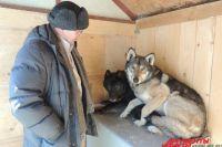 Два волкособа живут в детском зоопарке на территории парка Горького.