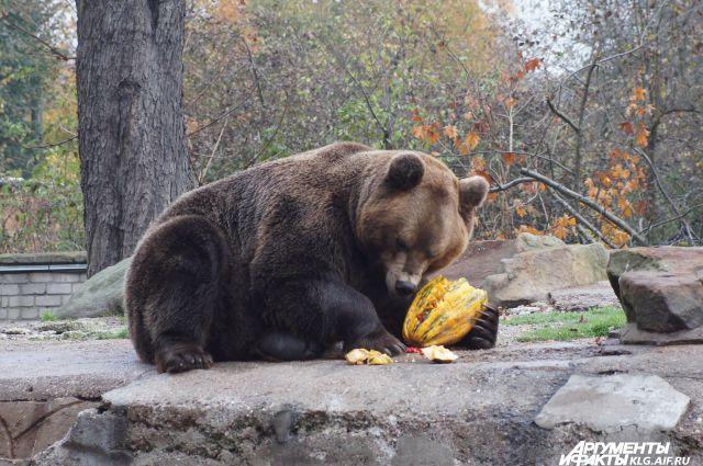 Калининградский зоопарк.