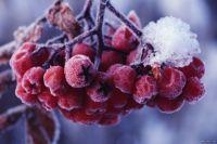 Выходные в Украине будут снежными и морозными, с сильным ветром