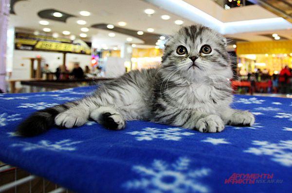 На выставке можно было смотреть на котят разных пород, но трогать их не разрешалось.