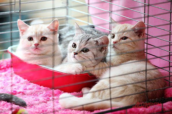 Многие котята в этот день ждали своих новых хозяев.