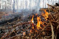 Жительница Славска спалила 5 га земли, чтобы избавиться от клещей.