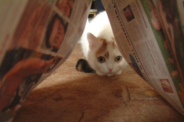 Фото вне конкурса оказались у двоих участников, невнимательно читавших правила. Милое фото с котиком от Елены Трофимкиной сделано с газетой, но не с АиФ.