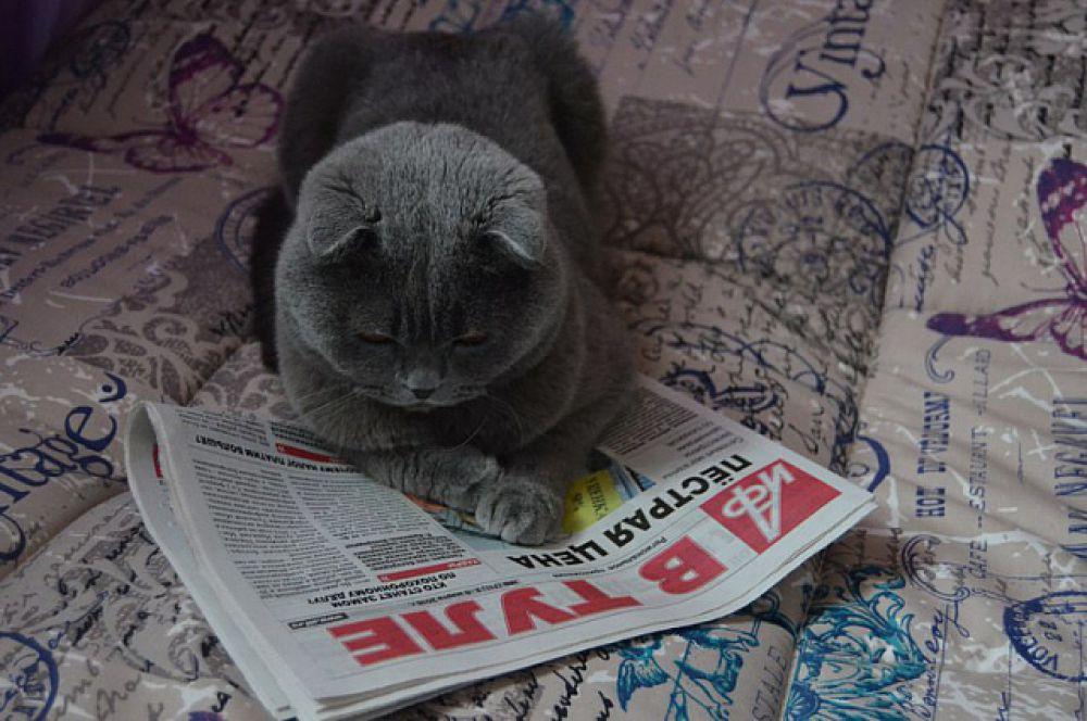 Пятое место у аристократичного кота Анны Спроновой.
