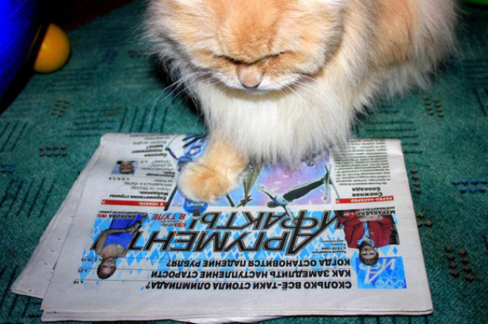 Первое место - кот Юлии Богомоловой за чтением олимпийского выпуска АиФ.