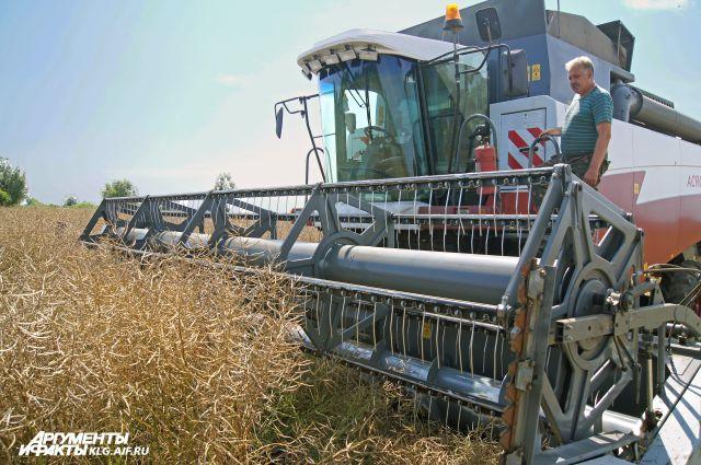 В прошлом году был рекордный урожай рапса.