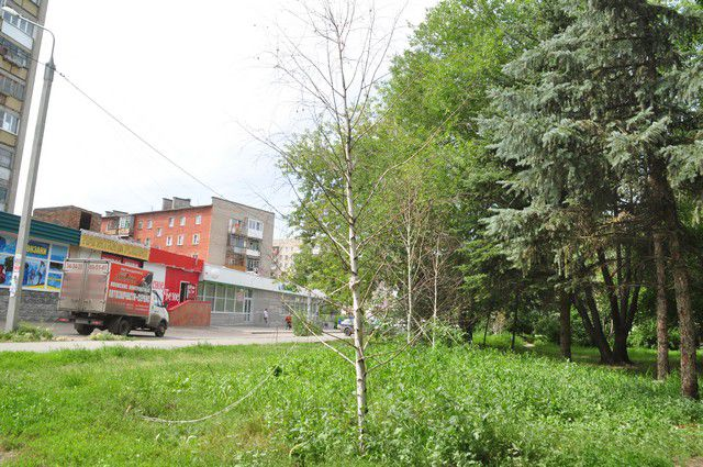 В Омске продолжаются работы по озеленению города.