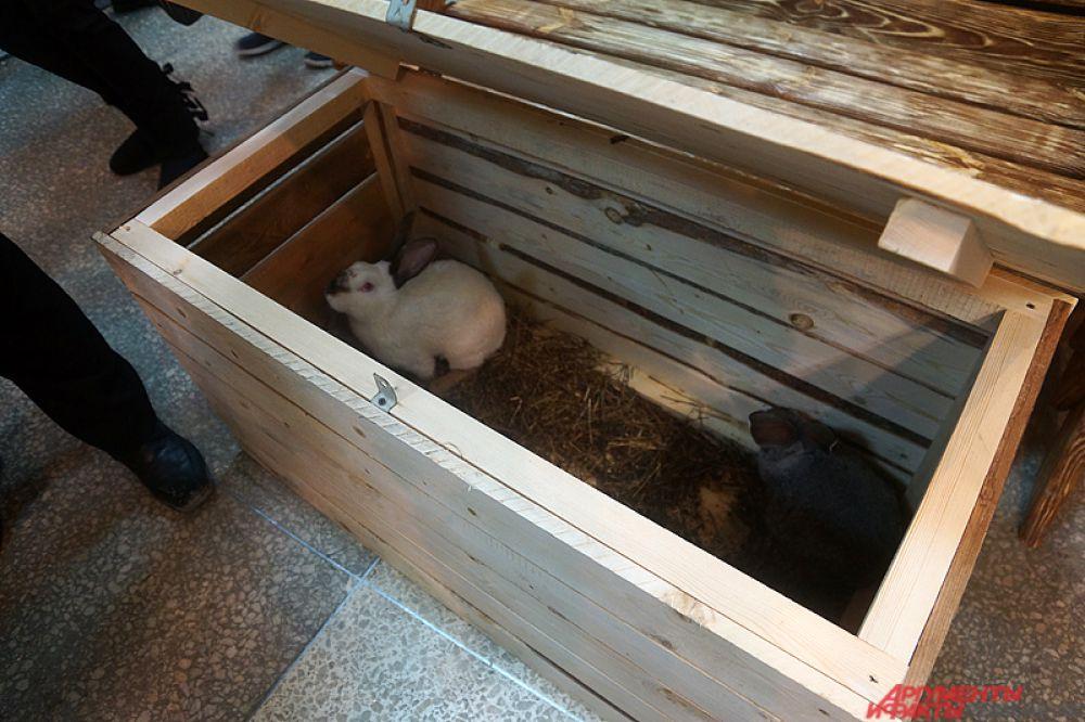 Живых кроликов отдают по 300 рублей за каждого.