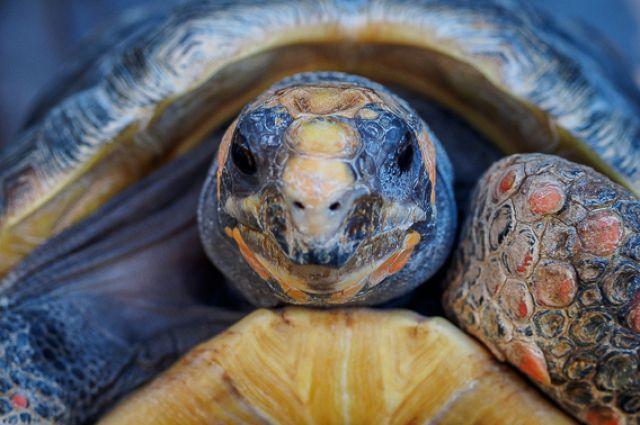 16:37 0 110 Пермяки спасли черепаху замерзавшую во льдах на берегу Камы Животное отнесли в ветклинику
