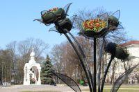 Тысячи цветов начали высаживать на клумбах главных улиц Калининграда.