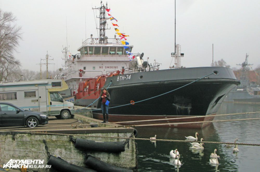 В состав военно-морской базы Балтийского флота входят корабельные и береговые части, а также части материально-технического обеспечения. Силы БВМБ отвечают за весь участок морского побережья Калининградской области РФ.