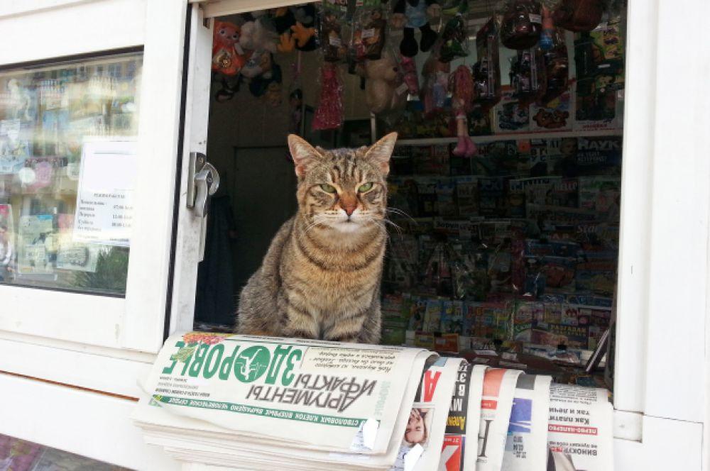Этого бездомного кота сфотографировала жительница Сочи Светлана. Его подкармливала продавец газетного киоска на улице Дарвина, иногда разрешала и квартировать, а в благодарность кот сидел у окошка и рекламировал прессу - особенно «АиФ». Сейчас продавец в киоске сменился, и усатого-полосатого туда больше не пускают.