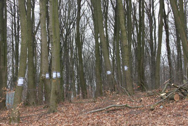 Условный срок получил житель Балтийска за вырубку трех деревьев в городской черте.