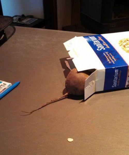 Мышку в доме изобразить нетрудно — потребуется «опрокинутая» коробка и подходящая по размеру свекла с хвостиком