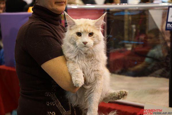 Международная выставка кошек продлится два дня – 2 и 3 апреля.