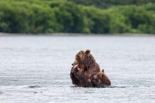 «Мама, дай мне рыбки».
