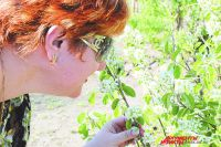 Аллергики с ужасом ждут, когда деревья начнут «пылить»...