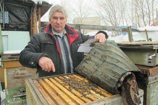 Камчатская природа заставляет местных пчёл активно работать.