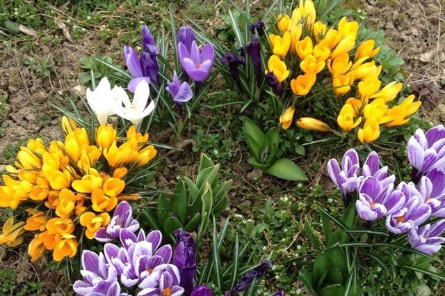 Тюменцы ждут, когда же распустятся весенние первоцветы.
