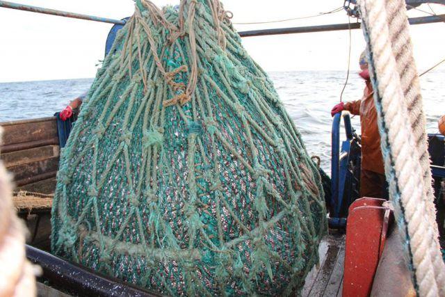 С начала года у браконьеров в Калининградской области изъяли полтонны рыбы.