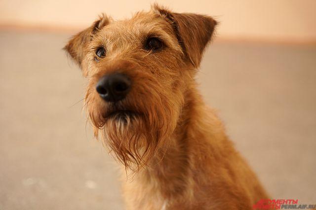 Собака Ника стала настоящим другом 5-летнему Кириллу.